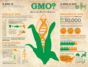 GMO-Fact-sheet